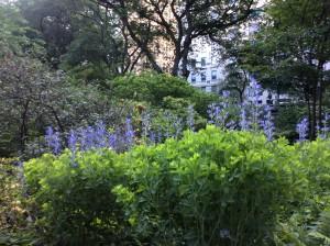 朝の散歩はセントラルパーク